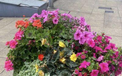 Brixham in Bloom take Gold